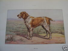 COMPOSITION CASTELLAN CHIEN CHASSE SPINONE