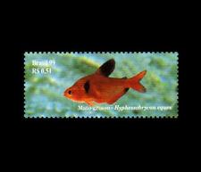 Fishes Pantanal Brazil - Jewel Tetra (Hyphessobrycon eques) Brasil 1999