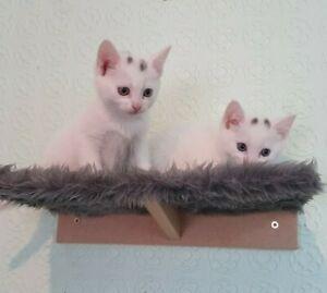 Furry Cat wall shelves set of 4