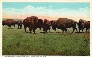 Black Hills, SD, Buffaloes in the State Park, Linen Vintage Postcard a4646