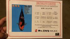 20 inches Danichi Female Showa High Quality Auction KoiLive Fish