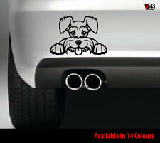 Funny Peeking Schnauzer Dog Car Window Bumper Van Vinyl Decal Sticker