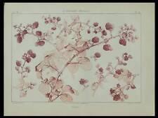 MURES, HABERT DYS -1896- LITHOGRAPHIE, ART NOUVEAU, FLEURS,