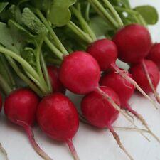 Radish Cherry Belle x200 seeds Vegetable Seed
