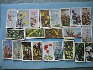 Brooke Bond Tea Cards WILD FLOWER 'A' SERIES 1955  CHOOSE ANY FIVE CARDS