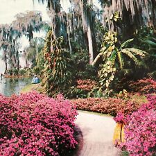 Florida FL Cypress Gardens Azalea Lined Path Postcard Old Vintage Card View Post