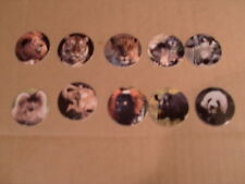 POGS BORDEN SAN DIEGO ZOO ANIMALS POG COMPLETE SET of ALL 10 NICE COLORFUL
