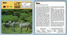 Zebra - Mammals - 1970's Rencontre Safari Wildlife Card