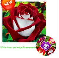 White Red Edge Rose Bonsai Garden Plants Potted Flowers Plants 100 PCS Seeds NEW