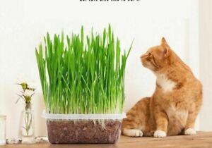 Cat Grass Cultivation Kit Cat Snack Nursery Pots Cat Grass Planting Box Children