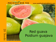 Red guava Psidium guajava - 20 Seed Count
