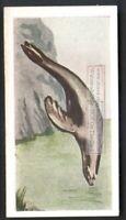 Seal Sea Marine Mammal Fur Pelt Ocean  60+ Y/O Ad Trade Card