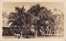 Postcard Rppc Young Cocoanut Palms Guantanamo Cuba