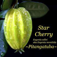 ~PITANGATUBA~ Eugenia selloi STAR CHERRY FRUIT TREE Live 3-4+ft Potted Plant