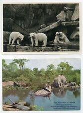Tierpark Hagenbeck, Hamburg (2) Postkarten Echte Originale 1920er J.