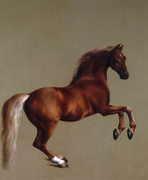 Whistlejacket by George Stubbs, Horse, Equestrian Art, 1762, Museum Canvas Print