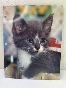 Vintage Mead Trapper Keeper Portfolio Kitten Kitty Gray 2 Pocket Folder