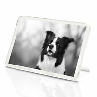 Classic Magnet With Stand - BW - Black & White Border Collie  #42571