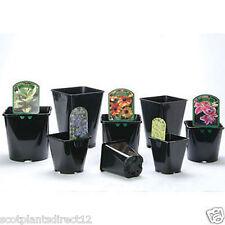 100 x 2 Litre Square Plastic Plant pots (e419)