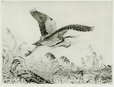 A wonderful Winifred Austen etching, Heron Flying, pencil signed, c.1930