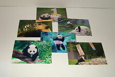BAO BAO The Panda Bear Cub  #19