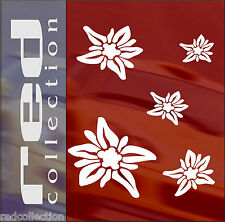 redcollection AUTO AUFKLEBER Car Tattoo Edelweiss 15 Blumen  Sticker