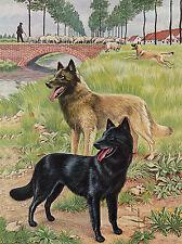 BELGIAN SHEPHERD DOGS LOVELY DOG GREETINGS NOTE CARD
