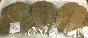 30 Seemandelbaumblätter 15cm - 20cm Top Qualität Catappa Leaves #Lagerräumung#