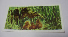 Brooke Bond/ PG Tips Birds Collectable Tea Cards