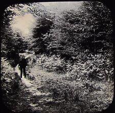 Glass Magic Lantern Slide WOODRIDDEN HILL FOREST PATH C1890 PHOTO WALTHAM ABBEY