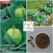 50 CABBAGE SEEDS - PRIMO 2 (Brassica oleracea); Ideal for salads