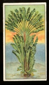 Tobacco Card, B Morris, MARVELS OF THE UNIVERSE, 1912, Travellers Tree, #16