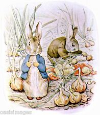 tales of BEATRIX POTTER peter rabbit  pictures& Audio CD rom read listen print