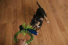 Fleece Dog Toys in a Ring Shape: Great for Interactive Play, Multiple Colors