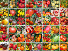 Tomatensamen Sortiment aus 48 Sorten, 2 Samen je Sorte