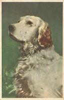 Vintage 1950s Postcard, White Brown English Setter Dog Portrait KS1