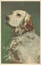 More details for vintage 1950s postcard, white brown english setter dog portrait ks1