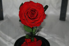 Real preserved red Rose Gift Fresh Flowers In Glass Dome
