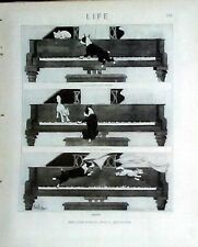 Boston Terrier Dog & Cat On A Grand Piano 1919 Life Magazine Reprint