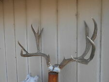24 7/8 wide 6x5 Colorado MULE DEER RACK antlers whitetail mount sheds taxidermy