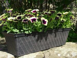 Large Long Plastic Trough Window Box Planter Herb Flower Box Home Garden 53cm