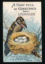 Wales Montgomeryshire BRYNMAWR Pocket Novelty Bird used 1923 PPC