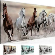 WANDBILDER XXL BILDER Pferde VLIES LEINWAND BILD KUNSTDRUCK 014112P