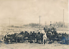 "Antique Photograph, Hay Wagon and Herd of Mules, 7"" by 5"", Farmer, Harvest"