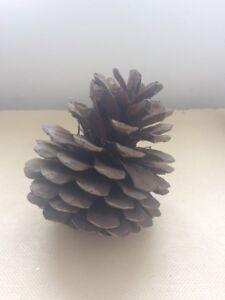 Large Woodland Cone