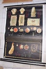 Original vintage medical pull down school chart of Tapeworm and parasites 2 x