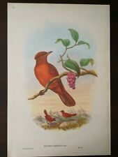 JOHN GOULD THE BIRDS OF NEW GUINEA,BRITISH MUSEUM NATURAL HISTORY,COLOUR REPRINT