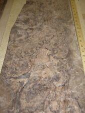 """Walnut Burl wood veneer 11"""" x 24"""" raw with no backing Aaa quality grade 1/42"""""""