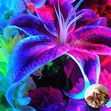 Blue Heart Lily Bulbs, Royal Blue Lily Bulbs, Rare Flower Bonsai Plant, 2Pcs/Lot