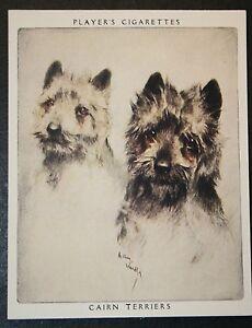 CAIRN TERRIER   Superb Vintage Twin Portrait Card  EXC